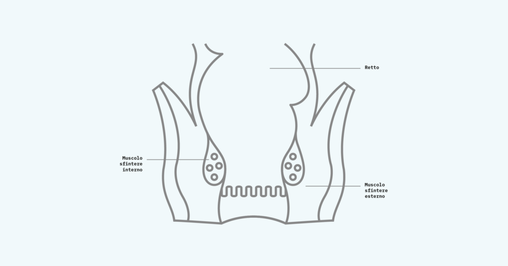 upport_In_Continence_Infographics_Internal- Sphincter Mmuscle IT